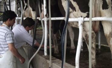2015 con el pie izquierdo: Productores de leche analizan judicializar la baja en el precio que anuncio la industria láctea