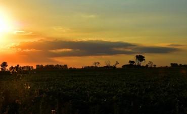 Info para el hombre de campo: Agricultura, Ganaderia, Forestación,Fruti-horticultura, y Agro-industria. Espacio, presentado por la Asociación Rural de Gral Vte