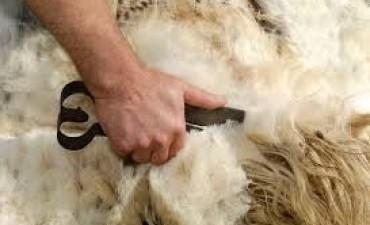Mesa de fortalecimiento del sector ovino