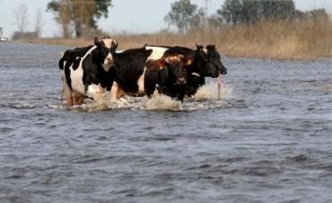 Situación crítica en algunos distritos.  Advierten sobre el peligro de inundaciones en la Provincia