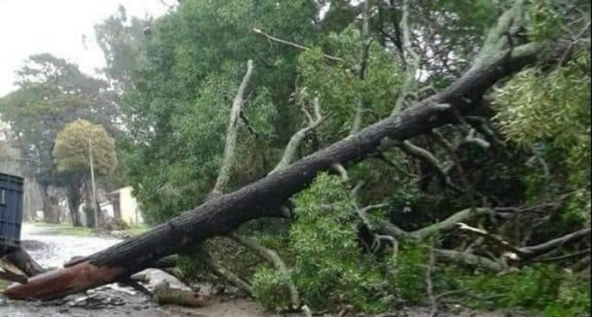 Fuerte temporal de viento y lluvia en Mar del Plata