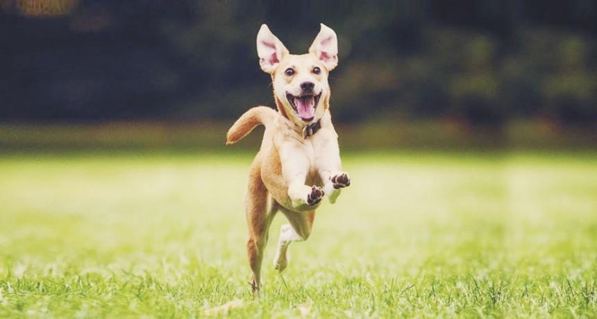 Un mundo de olores: cómo funciona y qué tan potente es el olfato de un perro