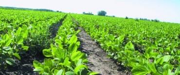 """Prevén una cosecha de soja """"dispar"""" para los campos de la Región"""