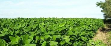 AFIP presiona a productores por la venta de soja