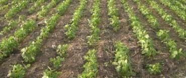 """Crece la preocupación en el campo por la sequía: """"La cosecha puede ser un fracaso"""""""