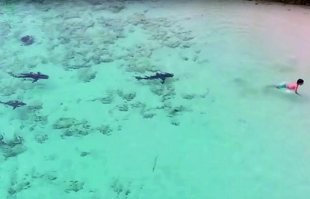 Peligro en el mar: un niño se salvó de ser atacado por cuatro tiburones