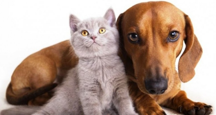 El móvil veterinario estará realizando castraciones gratuitas