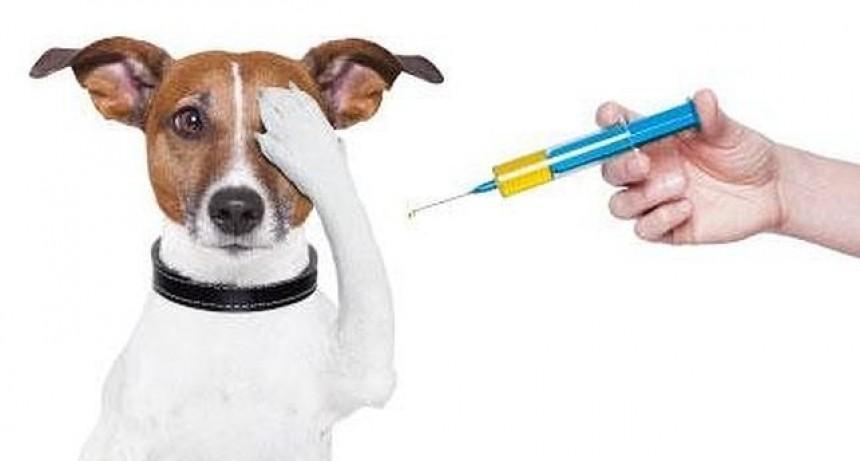 El móvil veterinario estará realizando atención normalmente desde el día 27 de enero
