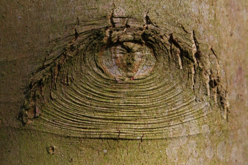 Las plantas tienen mejor visión que los humanos, aun no teniendo ojos