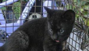 Encontró un gato, lo adoptó, pero se llevó una sorpresa...
