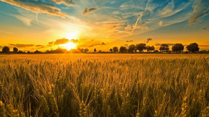 Informacion actualizada para el hombre de campo: Agricultura, Ganaderia, Forestación,Fruti-horticultura, y Agro-industria