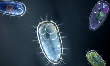 En un niño atendido en Junín, por primera vez, detectaron un caso de la ameba