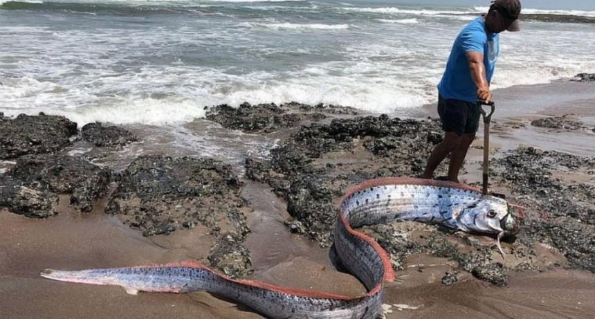 Temor en Japón por la aparición de peces remo