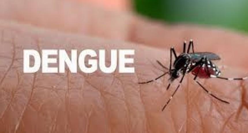 73 casos de Dengue en la Provincia: hay circulación autóctona del virus