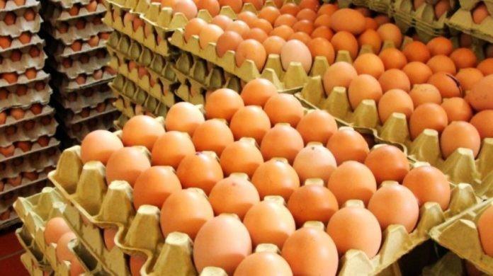 CECILIA SARCO | Producción de huevos: crisis en el sector pese a mayor demanda