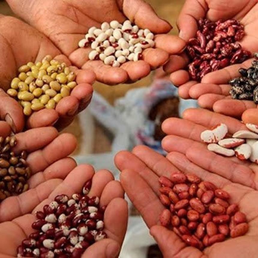 SILVIO LOPAPA  Cuidado de semillas