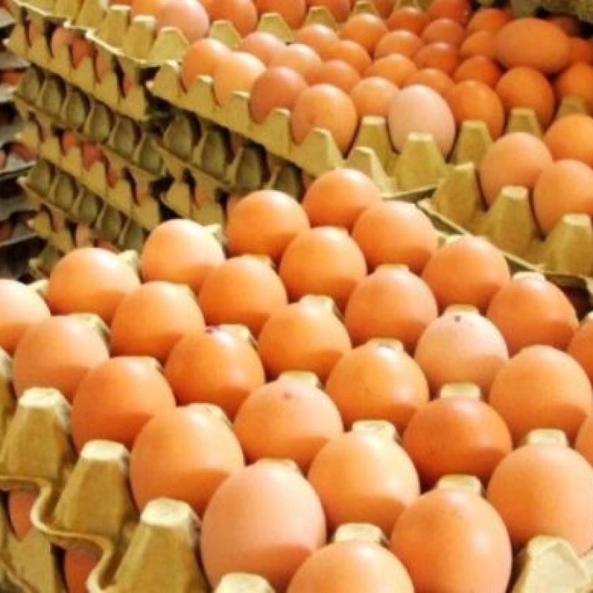 CECILIA SARCO   Producción de huevos: crisis en el sector pese a mayor demanda