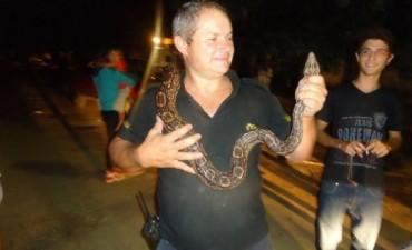 Defensa Civil de Chivilcoy alertó sobre la presencia de serpientes. APARECIÓ UNA PITÓN