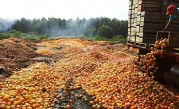CORRIENTES: Ante la imposibilidad de vender, productores tiraron 10.000 toneladas de cìtricos