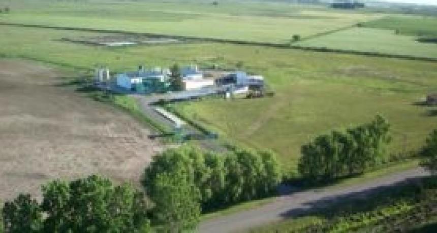 Impacto del Covid-19 en la economía: Una empresa láctea de 9 de Julio suspendió su producción