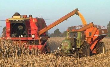 Los rindes también impulsan los pronósticos de la cosecha de maíz