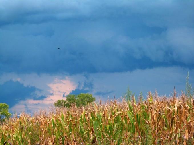 Info actualizada para el hombre de campo: Agricultura, Ganaderia, Forestación,Fruti-horticultura, y Agro-industria