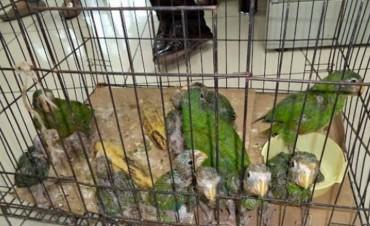 Incautaron más de 450 aves exóticas, próximas a ser vendidas