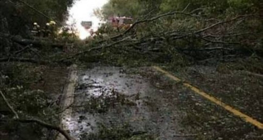 """Un accidente se produjo en inmediaciones del cruce """"El Tejar"""" durante la tormenta del domingo. Fallecieron dos jóvenes."""
