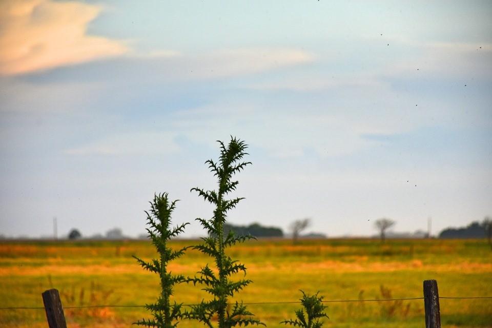 MONEDAS| Para el hombre de campo. Presenta Asociación rural de Gral Viamonte
