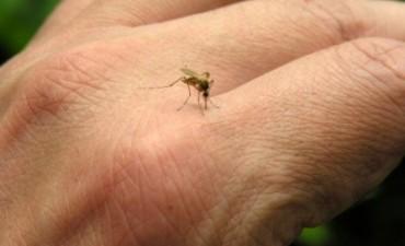 Invasión de mosquitos en Los Toldos: No se fumigará!