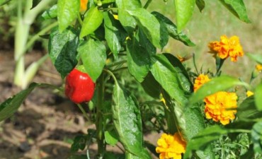 Huerta y jardin en otoño junto a Mary Guastelli