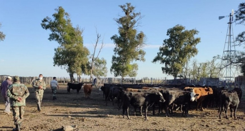 Robaron 28 novillos de un campo en San Emilio