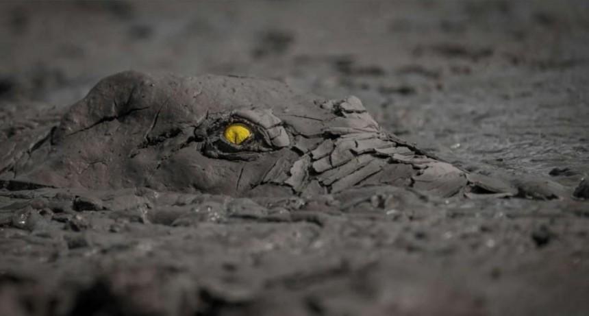 Un cocodrilo cubierto de barro, entre las mejores fotografías de naturaleza del año