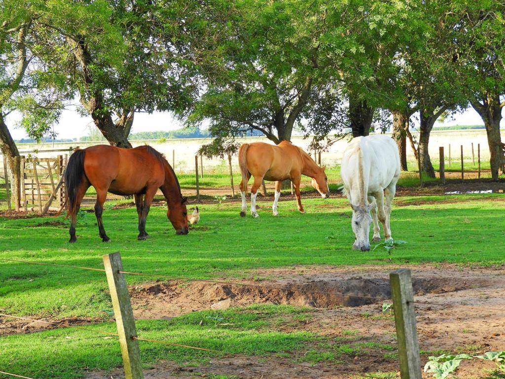 Info para el Hombre de campo. Presenta Asociación Rural de Gral Viamonte