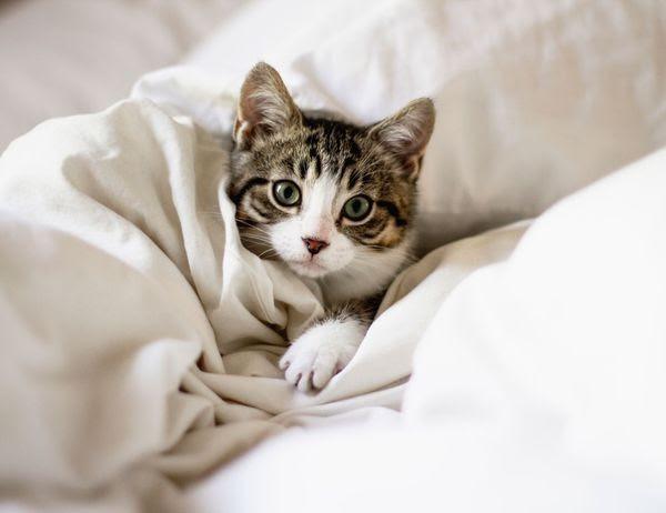 Cosas que hace tu gato y que la ciencia puede explicar