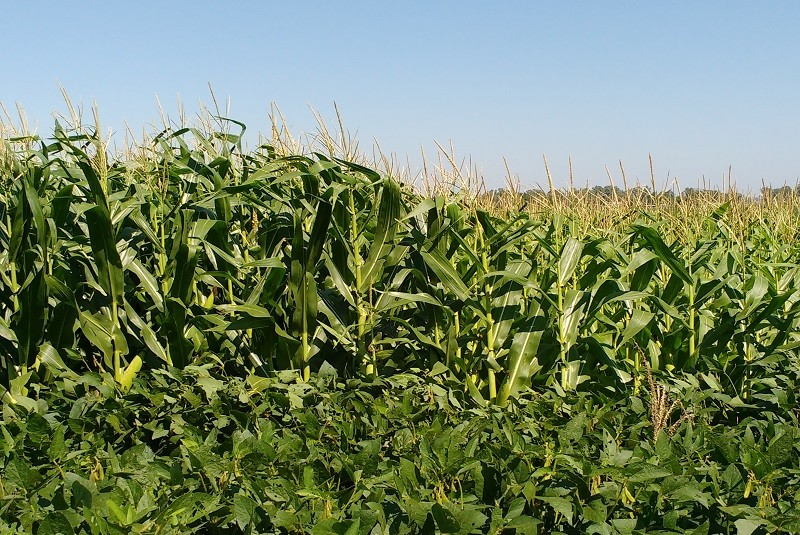 En la Argentina, sólo se repone el 30 % de los nutrientes que se extraen