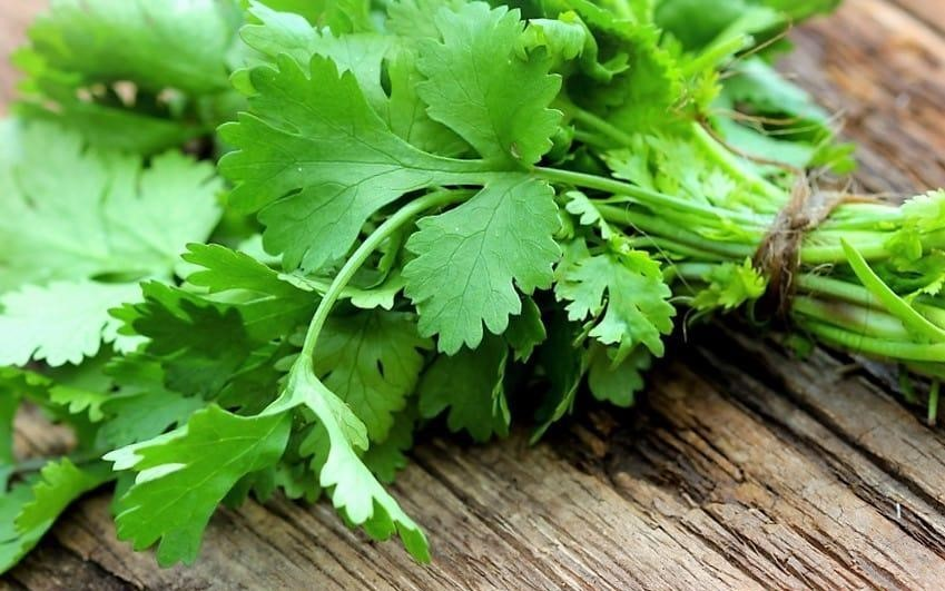 ING. AGR. CECILIA SARCO | El coriandro es una hierba aromática, pero también es una especia. Ultima entrega