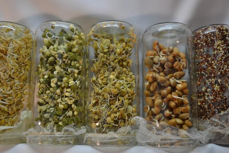 Cómo armar un jardín comestible para disponer de alimentos vivos