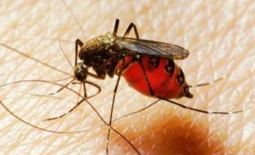 ¿Por qué los mosquitos te pican más a ti?