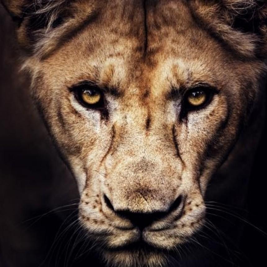 Los mamíferos más peligrosos para el ser humano