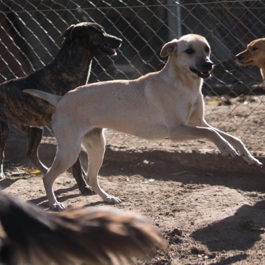 El Refugio tiene su lugar en las redes. Te animás a adoptar un perrito?