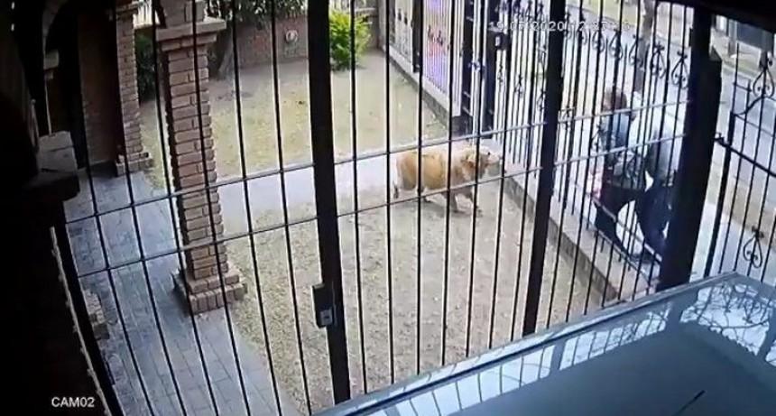 Nene de 5 años trató de defender a su mamá de un ladrón