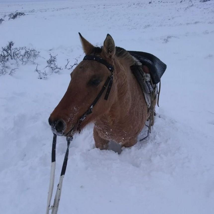 Temporal en Río Negro    Nieve y dolor en el sur: