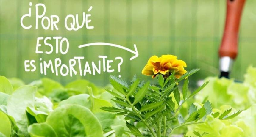 ¿Qué es la asociación de cultivos?