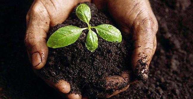 SILVIO LOPAPA | Hoy en nuestro espacio de huerta, hablamos del dia mundial del suelo