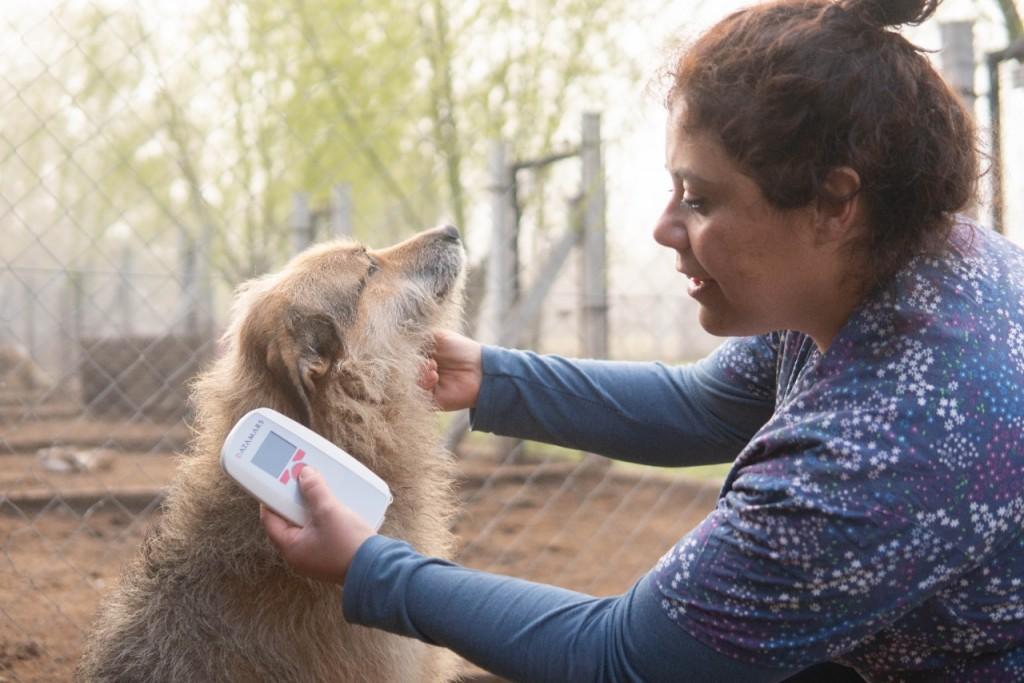GENERAL VIAMONTE | Sigue avanzando el cuidado de perros y gatos