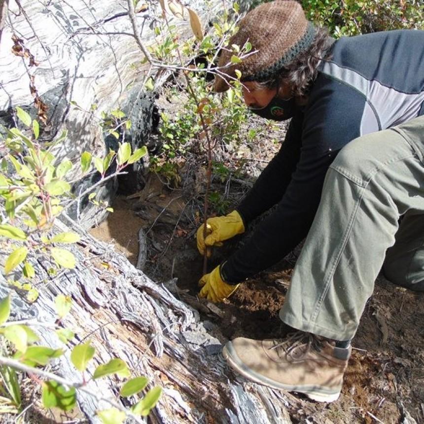Avanzan las tareas de reforestación en el Cerro Otto