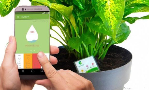 Una App para no olvidarse nunca más de regar las plantas