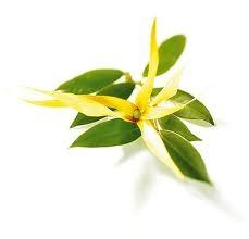 Aromaterapia By Claudia Hernàndez hoy un aceite en cada momento: