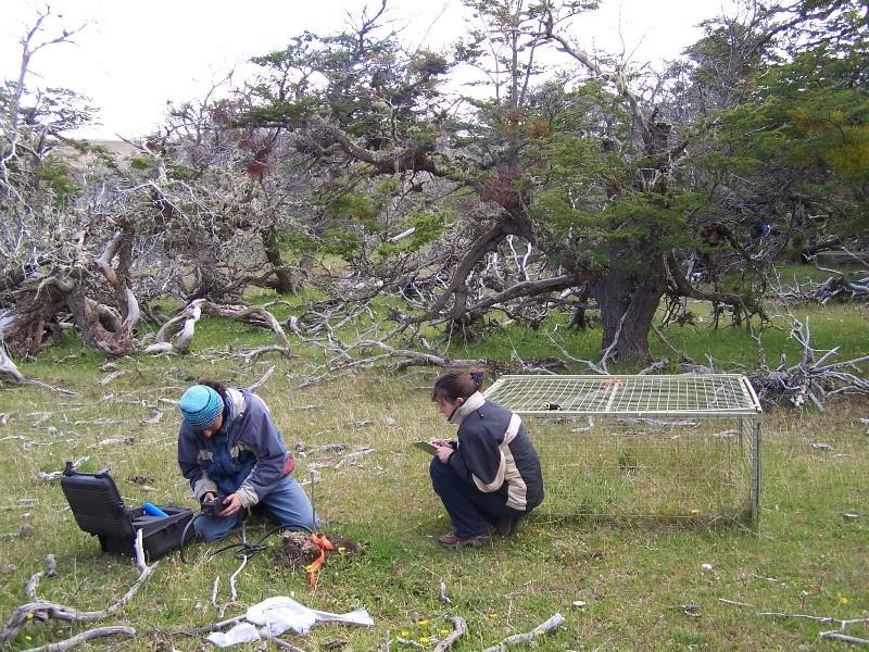 Estudian los microorganismos de los suelos patagónicos